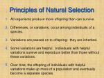 principles of natural selection
