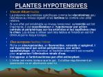plantes hypotensives
