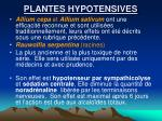 plantes hypotensives1