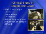 clinical signs in sheep and goats