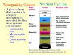 winogradsky column