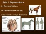 aula 6 equinocultura44