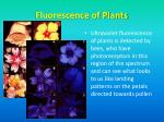 fluorescence of plants