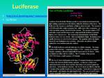 luciferase