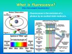 what is fluorescence http micro magnet fsu edu primer