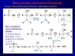 meccanismo dell esterificazione
