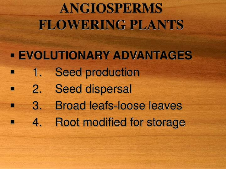 angiosperms flowering plants n.