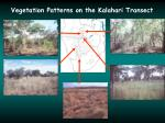 vegetation patterns on the kalahari transect