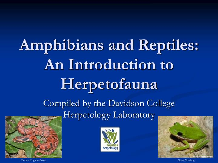 amphibians and reptiles an introduction to herpetofauna n.