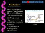 workshop task