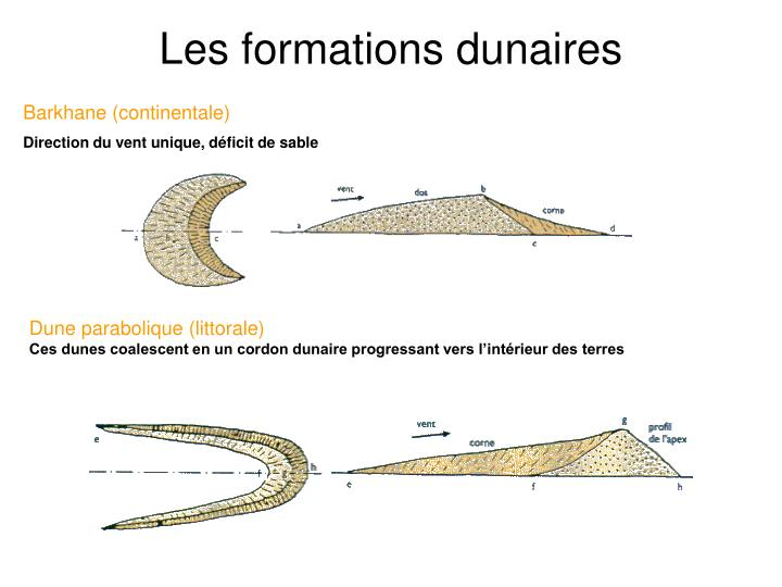 les formations dunaires n.