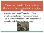 there are certain characteristics that make the copperhead a reptile
