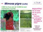 mimosa pigra suite3