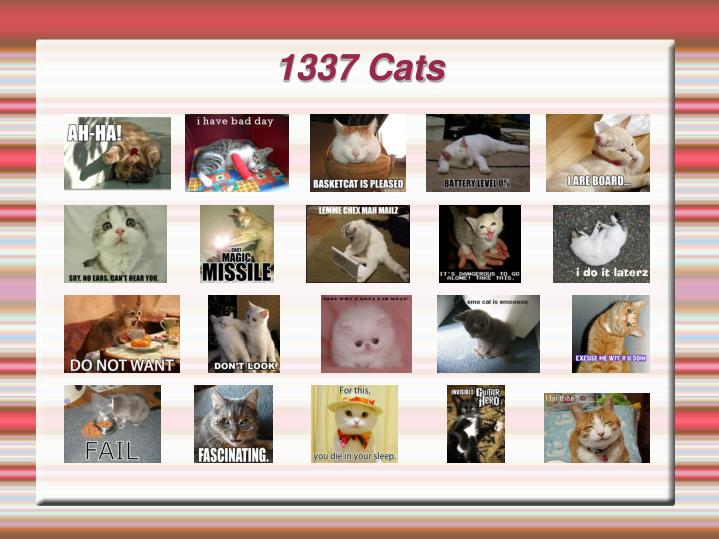 1337 cats n.