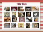 1337 cats