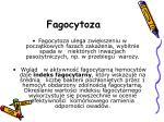 fagocytoza2