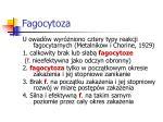 fagocytoza4