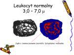 leukocyt normalny 3 0 7 0