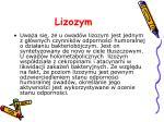 lizozym3