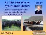 5 the best way to synchronize heifers