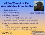 7 pre weaned vs un weaned calves in the feedlot
