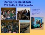 our spring break sale 570 bulls 300 females