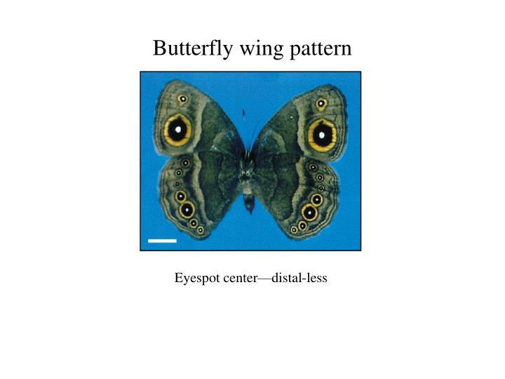 Butterfly wing pattern