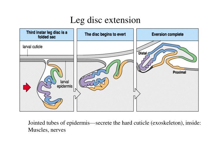 Leg disc extension