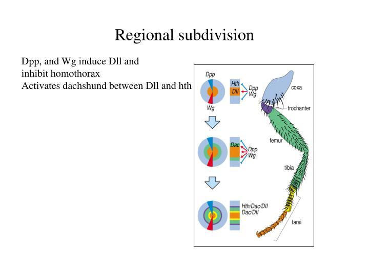 Regional subdivision