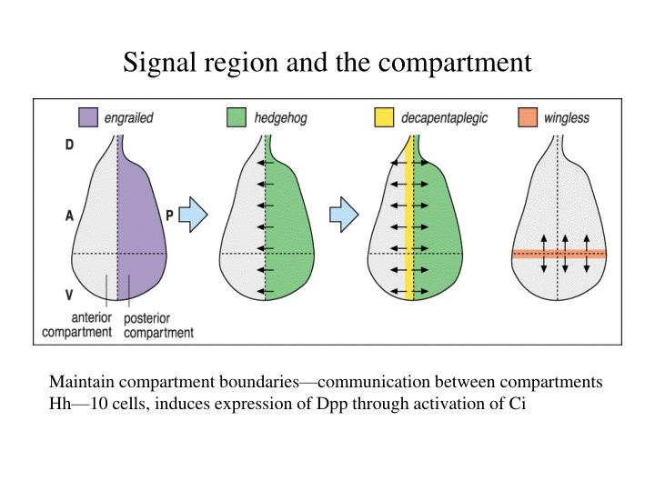 Signal region and the compartment