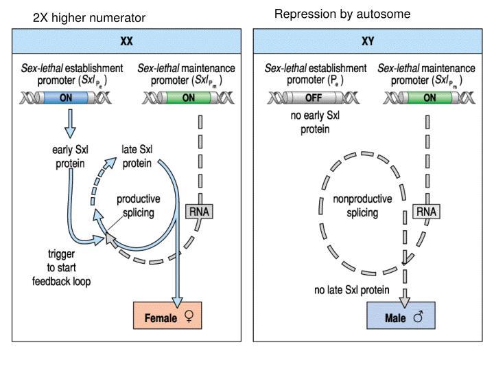 Repression by autosome