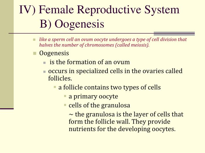 Iv female reproductive system b oogenesis1