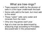 what are tree rings