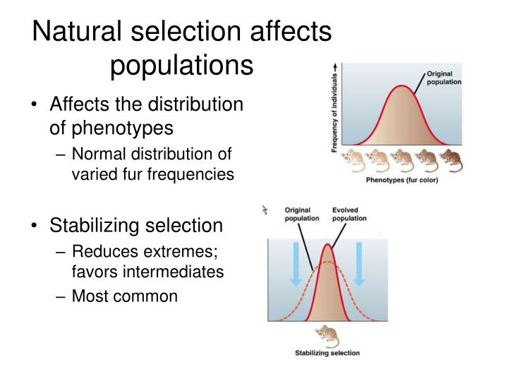 Affects the distribution of phenotypes