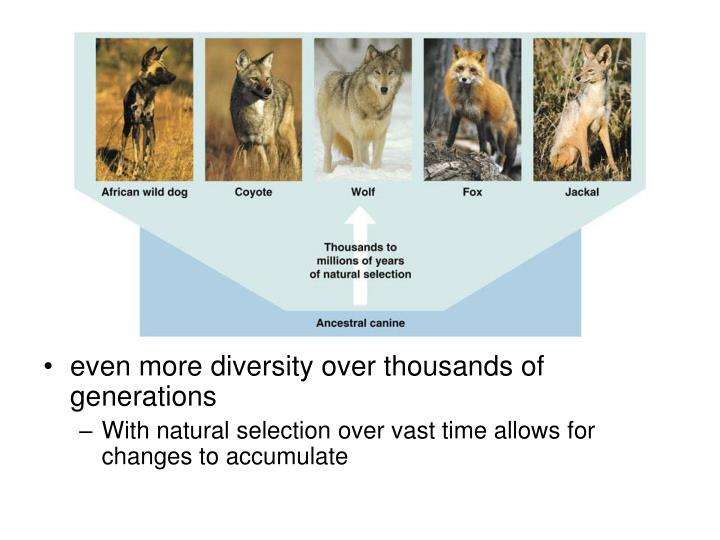 even more diversity over thousands of generations