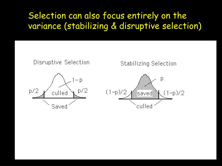 Selection can also focus entirely on the