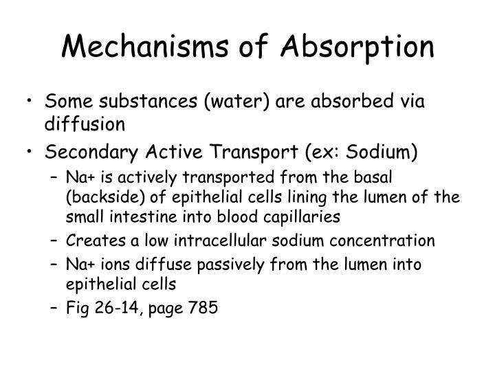 Mechanisms of Absorption