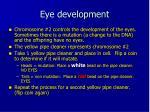 eye development