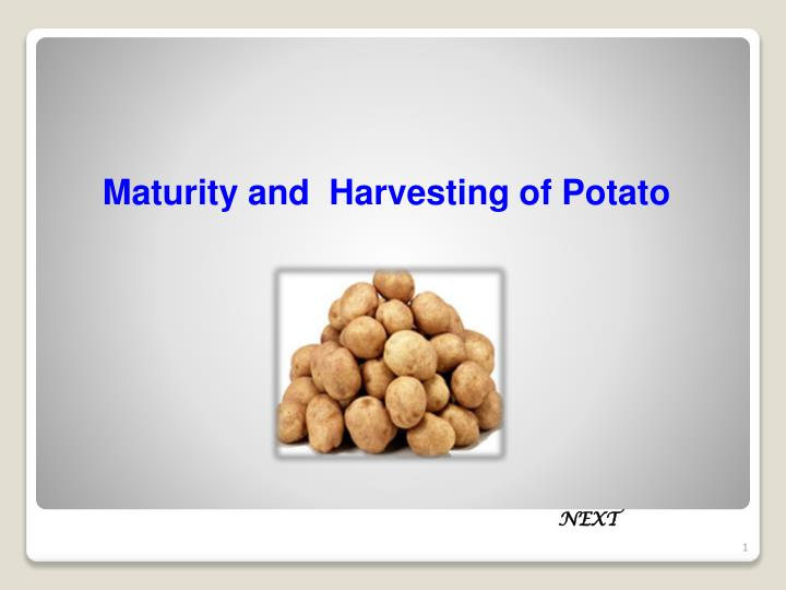 maturity and harvesting of potato n.