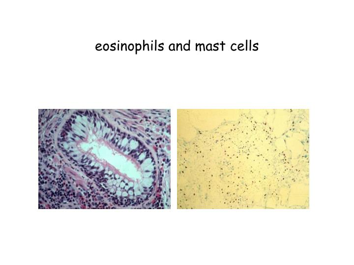 eosinophils and mast cells n.