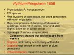 pythium pringsheim 1858
