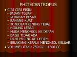 phitecantropus