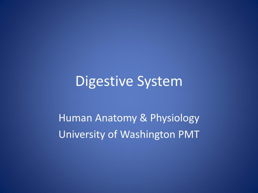 Ppt Digestive System Powerpoint Presentation Id1178975