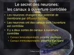 le secret des neurones les canaux ouverture contr l e