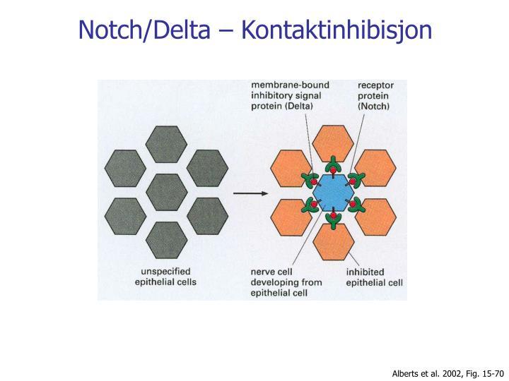Notch/Delta – Kontaktinhibisjon