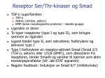 reseptor ser thr kinaser og smad1