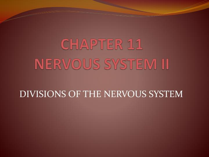 chapter 11 nervous system ii n.