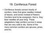 19 coniferous forest
