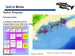 gulf of maine13
