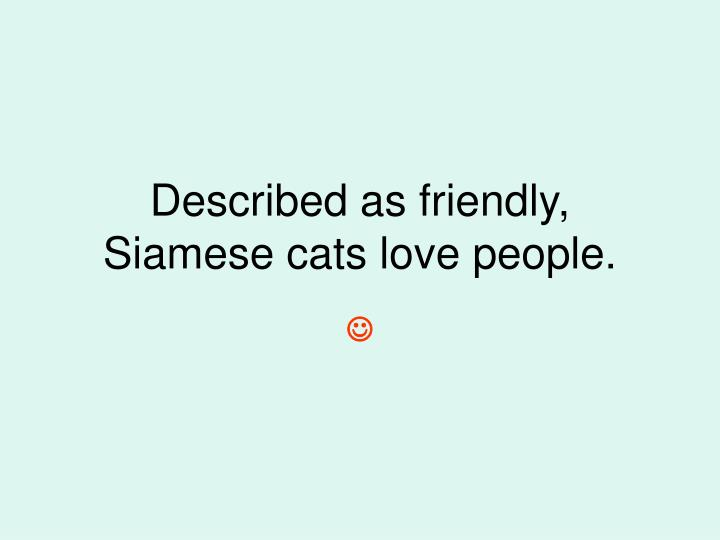 Described as friendly, Siamese cats love people.